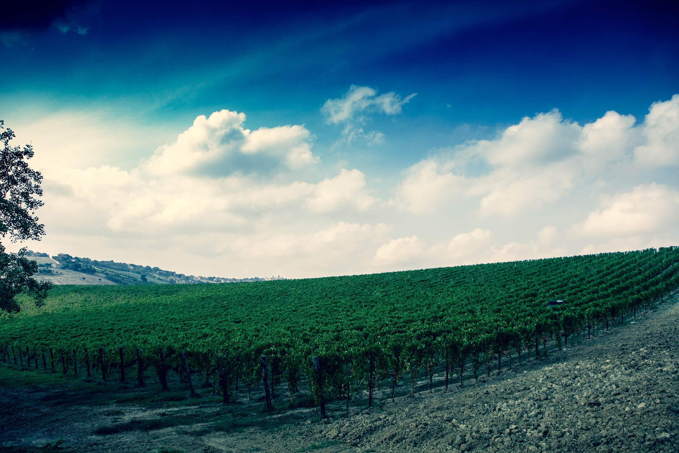 Filodivino, Wine Resort nelle marche